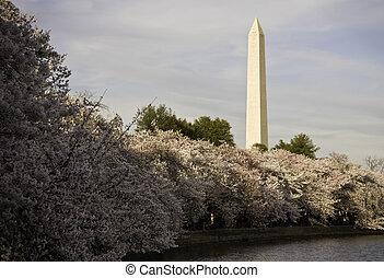 支撐, 櫻桃, 華盛頓, 花, 紀念碑