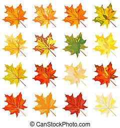 收集, 在中, 颜色, 秋季树叶