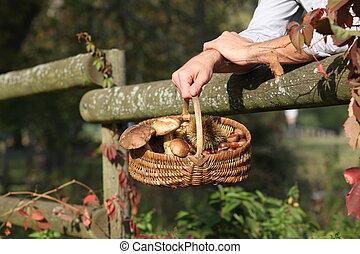 收集, 栗子, 以及, 蘑菇, 在, the, 森林