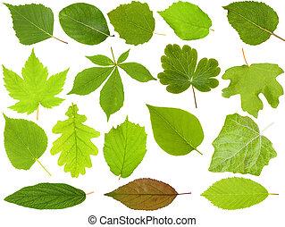 放置, 在中, 绿色的树叶, 隔离, 在怀特上, 背景