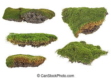 放置, 在中, 绿色, 苔藓, 隔离, 在怀特上, 背景