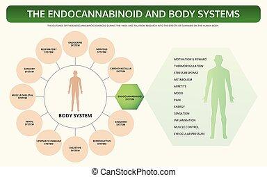 教科書, 体, infographic, 横, endocannabinoid, システム