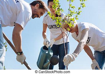 整洁, 植物, 土壤, 放, 队, 生产性, 年轻