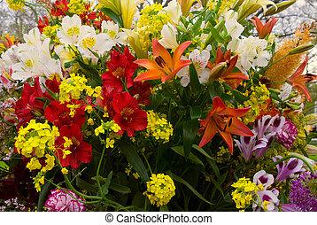 整理, の, カラフルな花
