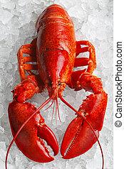 整體, 紅色, 龍蝦