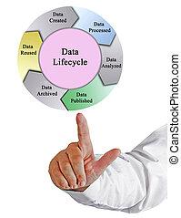 數据, 生命周期