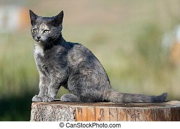 斑点を付けられる, 青い猫