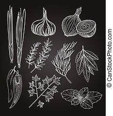 料理の, ハーブ, illustration., spices., 型