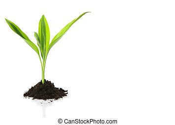 新しい生命, デザイン, (growth, concept)