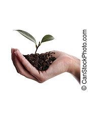 新しい生命, 実生植物, 手