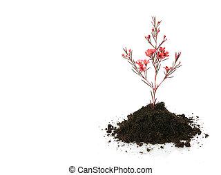 新しい生命, (growth, concept)