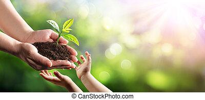 新しい, 植物, 若い, 環境, 世代, 古い, 寄付, 女, 子供, 保護
