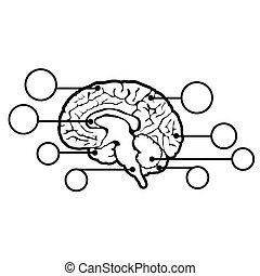新しい, 脳, 人間, 印