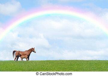 新しい, 馬, 子馬, 生まれる