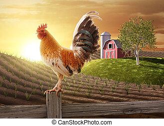 新たに農場で働きなさい, 朝
