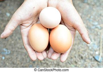 新たに, 卵