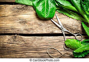 新たに, 古い, scissors., 緑になる