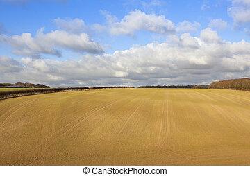 新たに, 小麦, sown, 収穫