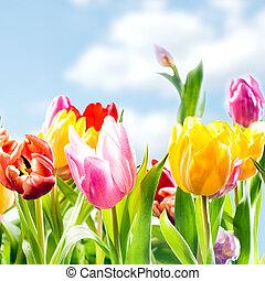 新たに, 春, 背景, の, 活気に満ちた, チューリップ