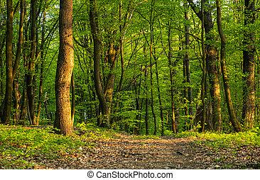 新たに, 春, forest.