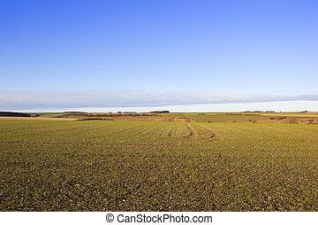 新たに, 植えられた, 小麦, 収穫