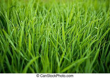 新たに, 草, ∥で∥, 露が落ちる