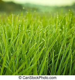 新たに, 草, 低下, 露