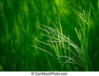 新たに, 草, 緑, 耳