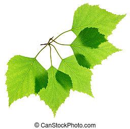 新たに, 葉, 緑, シラカバ