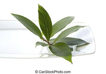 新たに, 葉, herbs., 湾