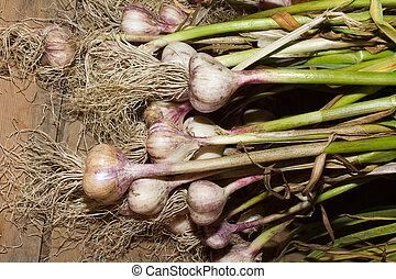 新たに, 選ばれた, garlic.