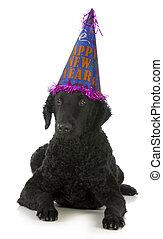 新年おめでとう, 犬