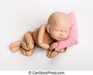 新生, 写真, 練習する, 人形