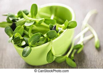 新芽, 綠色, 向日葵, 杯子