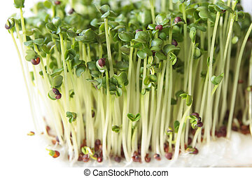 新芽, broccoli