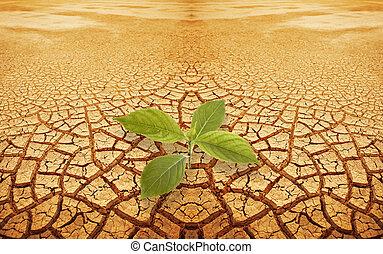 新芽, sprig, 在, droughty, 地面