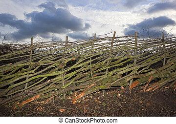 新近, 层, 树篱