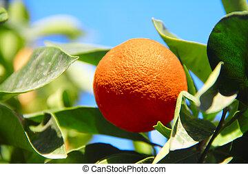 新鮮なオレンジ, 上に, 木