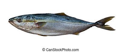 新鮮なマグロ, fish