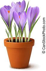 新鮮な花, 春