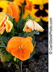 新鮮な花, 植えられた, 春