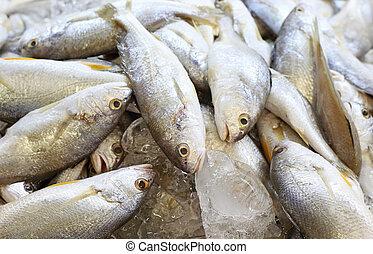 新鮮な魚, シーフード, 市場