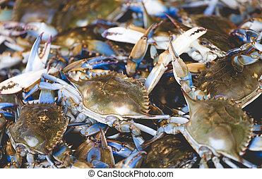 新鮮な魚, 市場, アメリカ人, カニ