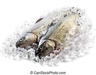 新鮮, 冰, 鱒魚