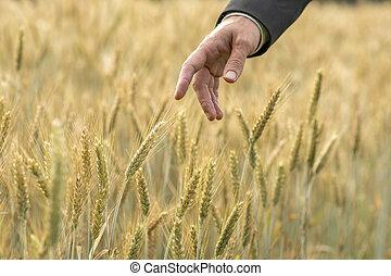新鮮, 商人, 小麥, 指, 手