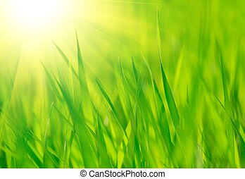 新鮮, 春天, 綠色的草, 以及, 明亮, 溫暖, 太陽