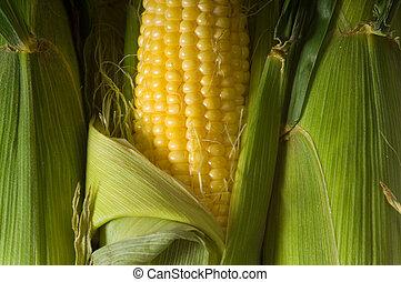 新鮮, 玉米棒子