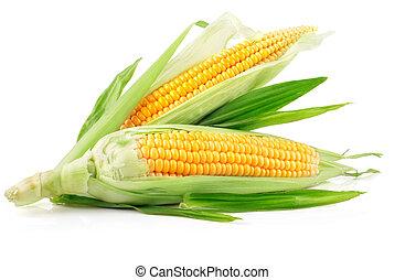 新鮮, 玉米, 綠葉, 水果