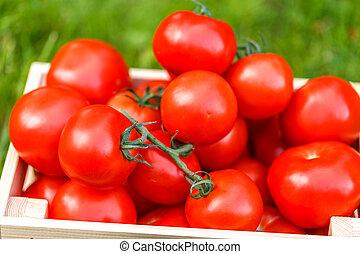 新鮮, 番茄, 在, 木盒