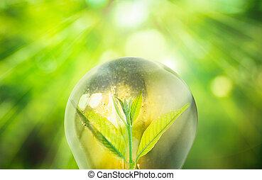 新鮮, 綠色, 小, 植物, 在, 燈泡